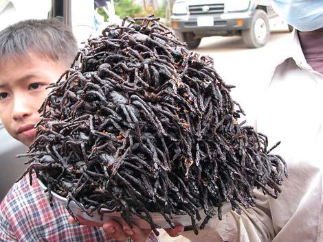 Frittierte Vogelspinnen