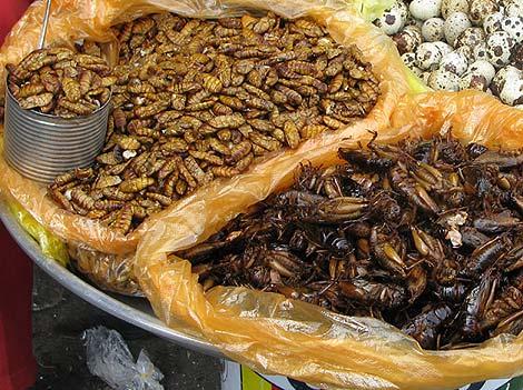 Käferlarven und Grashüpfer