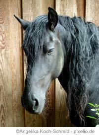 Warum nicht Pferde essen?